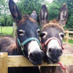 feed_a_donkey