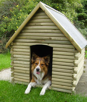 Sponsor a kennel paws animal rescue for Building a dog kennel business
